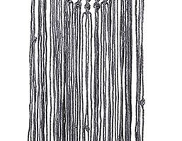 tapiz de algodón comparativa